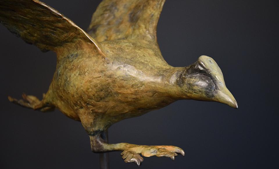 Meerkoet in brons - kop