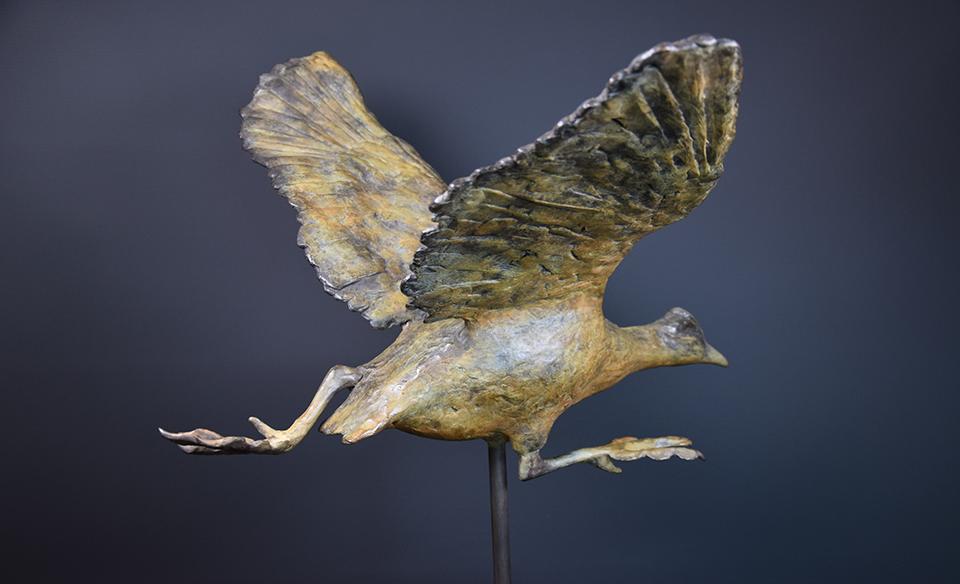 Meerkoet in brons - rechts